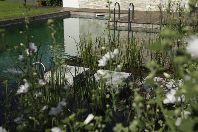 Une piscine sauvage et naturelle